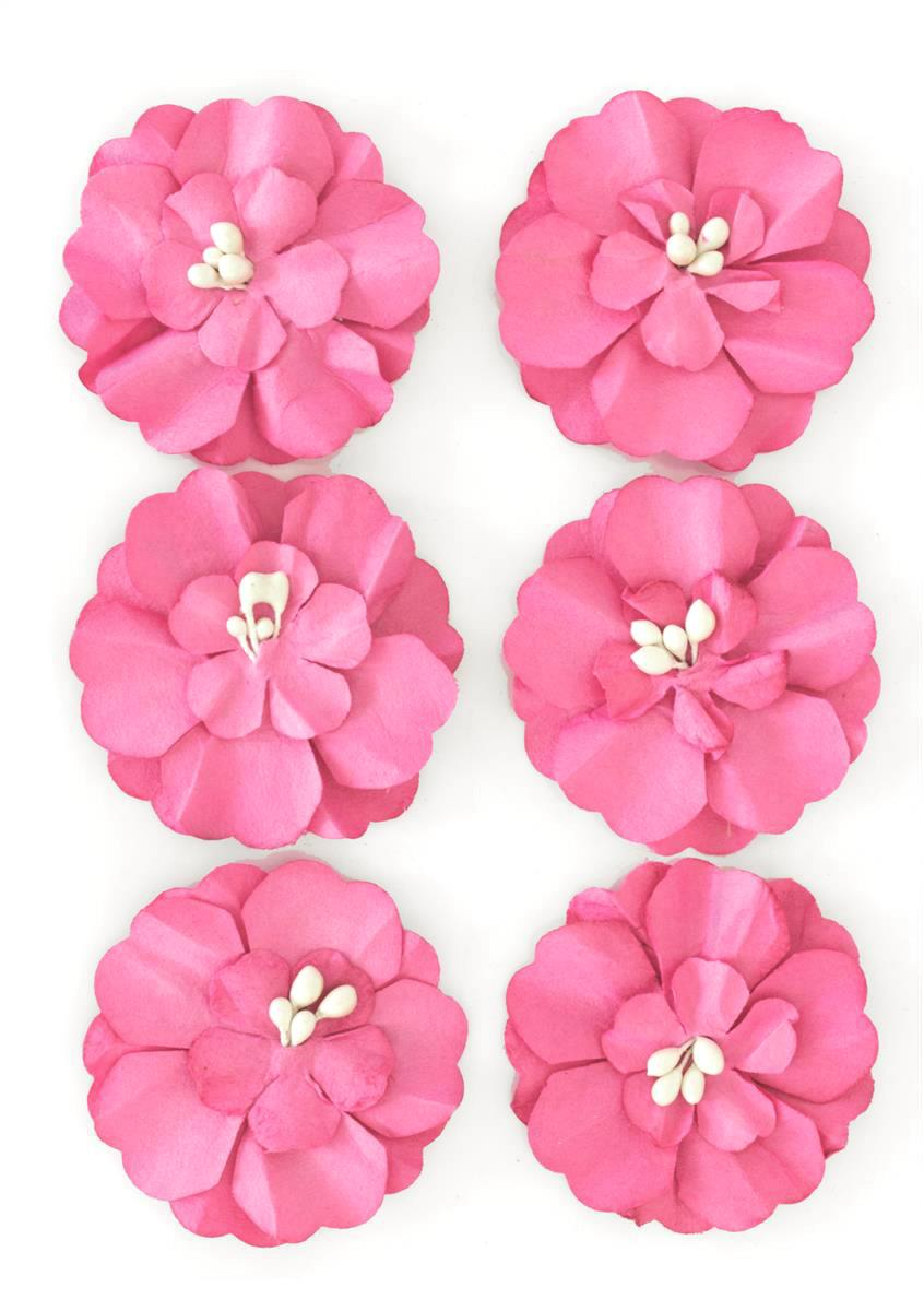 Kwiaty Cynia różowe