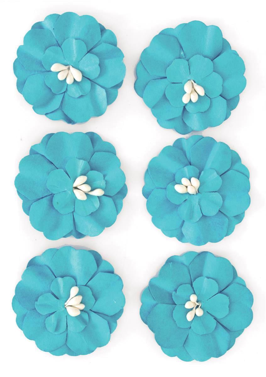 Kwiaty Cynia niebieskie