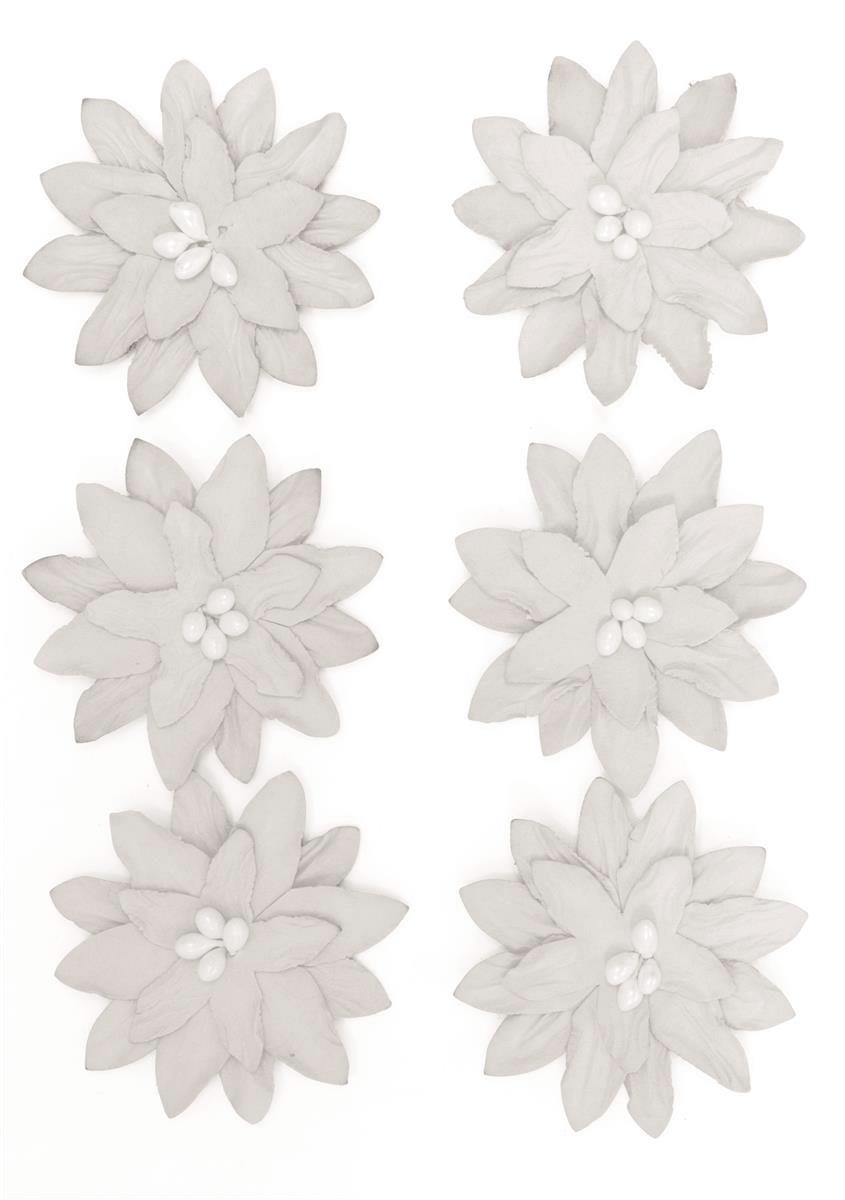 Kwiaty Dalia białe